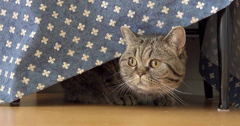Как кот-предатель подвел хозяина под статью