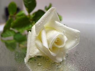 Сказка о райском цветке