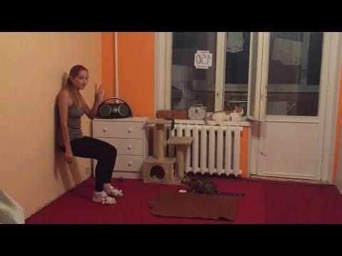 Видео приколы про животных 2017 / домашние животные жгут/ кошек и котов нет милее очень смешные