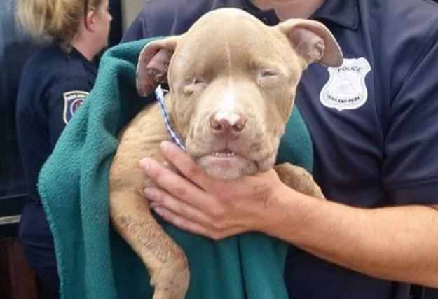 История спасения щенка, которого нашли в картонной коробке