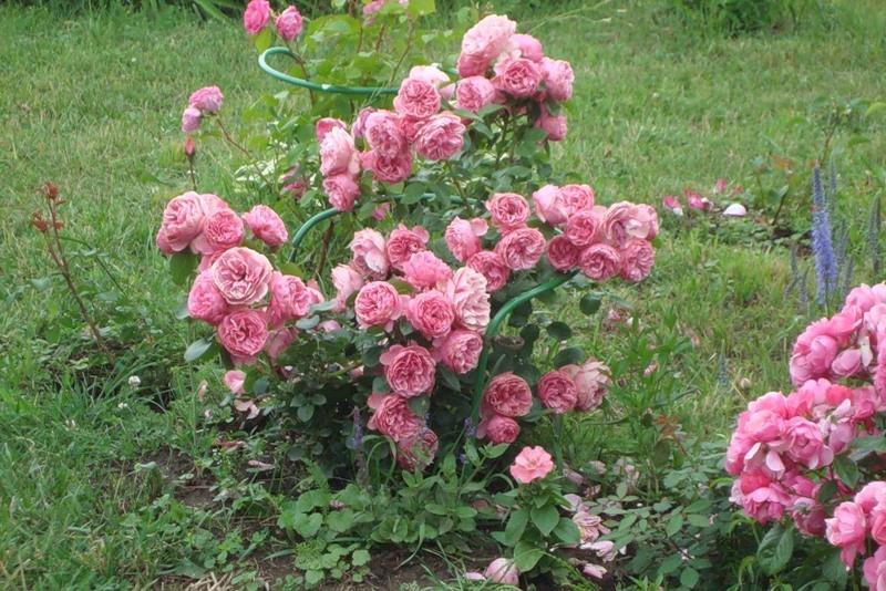 Ошеломительное цветение 2011 - Фотоконкурсы от Мира Увлечений!- я.ру