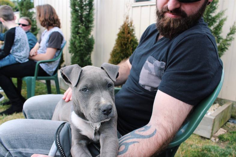Блог: как собаки помогают сп…