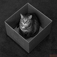 Кошки и Котята 71