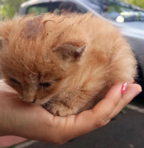 Нашли на дороге малюсенького котёнка...