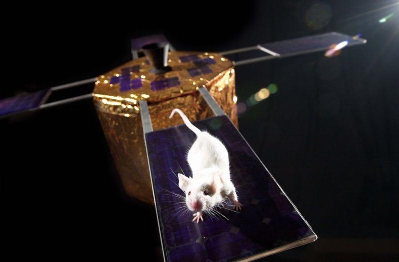 animalspace13 История покорения космоса животными