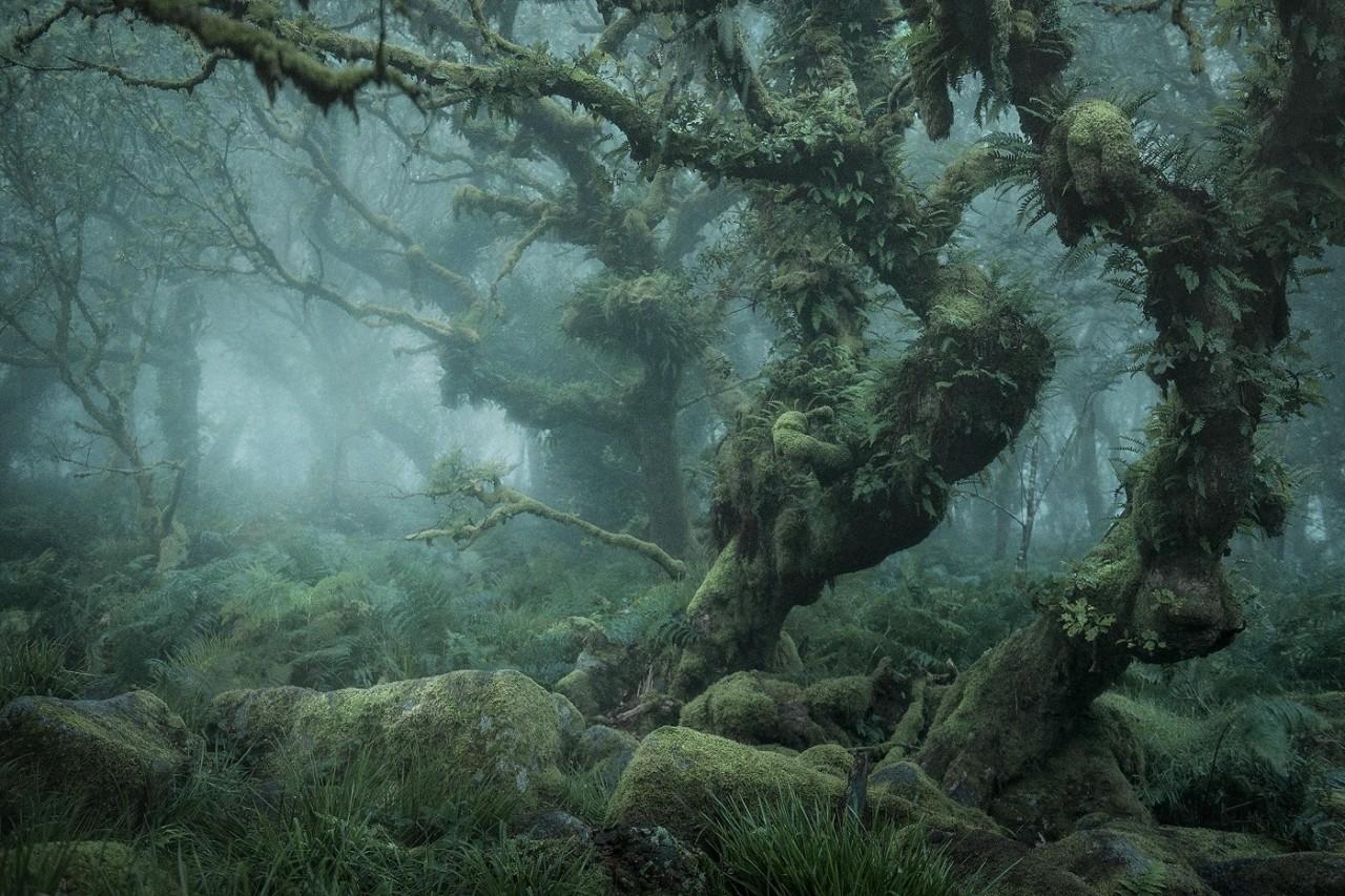 Мистический лес Нила Бернелла