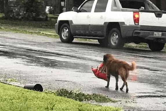 Пёс упорно тащил тяжёлый свёрток до ближайшего двора