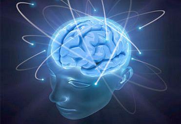Я мозг: научная (и шокирующая) правда, о моей работе