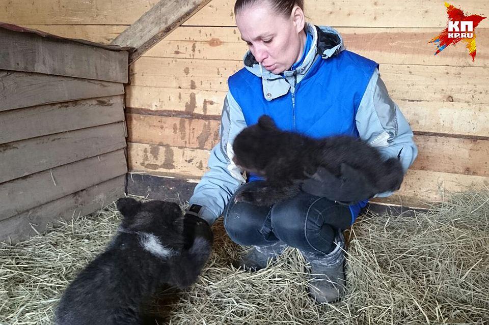 Охотник спас от голодной смерти четверых медвежат-сирот. Их мать убили браконьеры