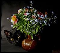 Кошки и Котята 76
