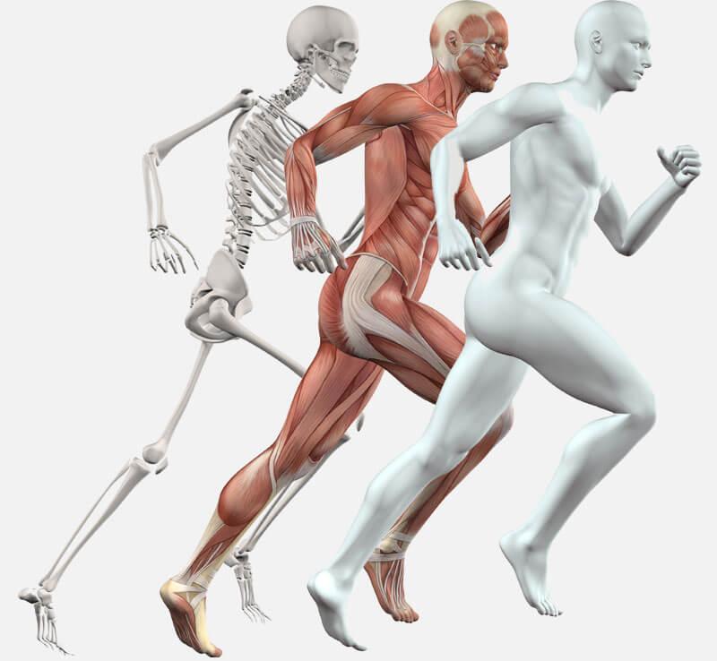 Способ продления молодости - правильное использование мышц