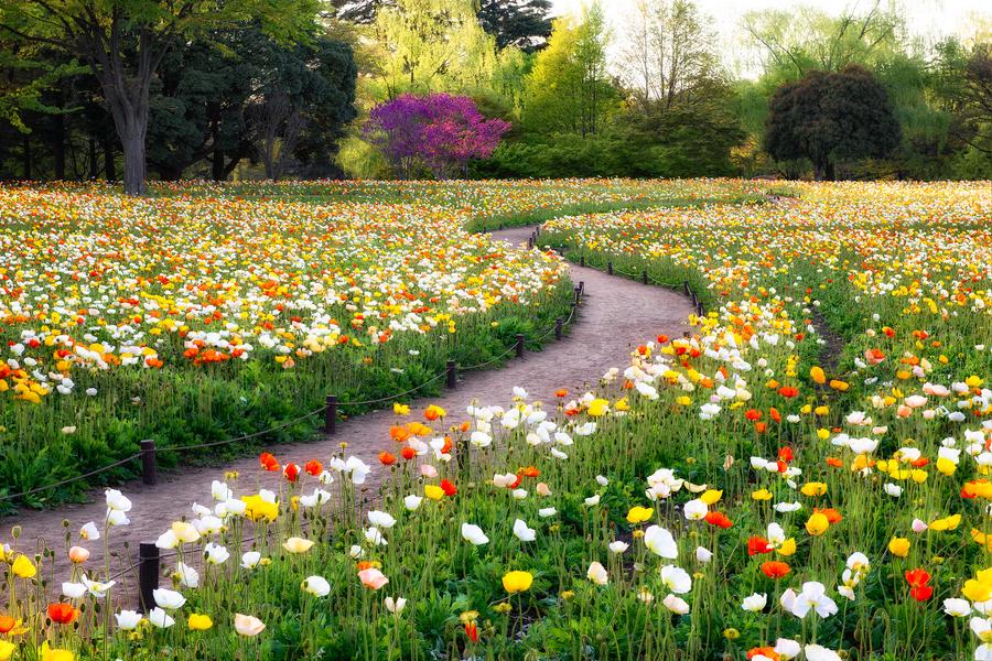 Красивые природы с цветами