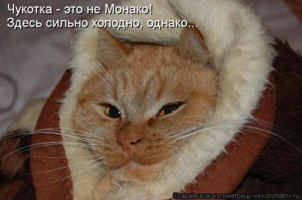 Фильмы про кошек  murlikamskru
