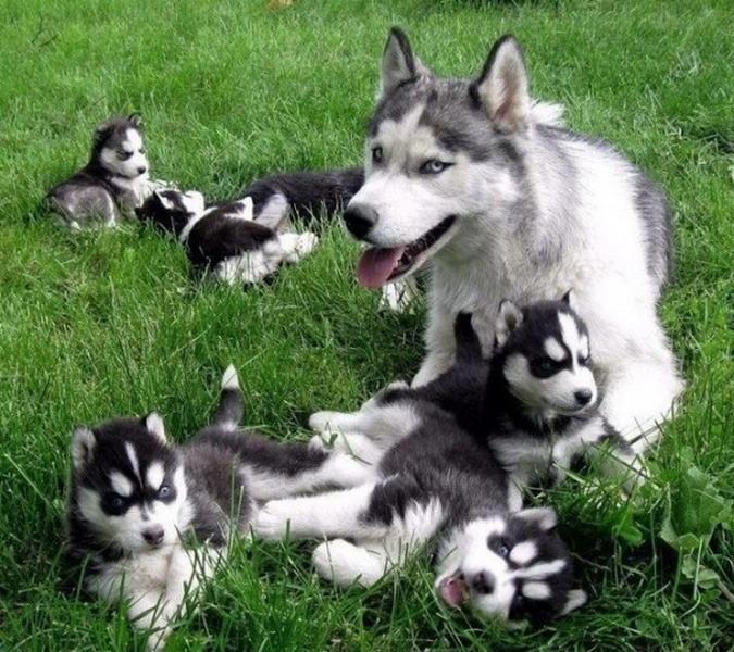 Матери-героини животного мира