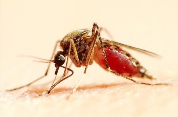 Простые способы спастись от укусов комаров