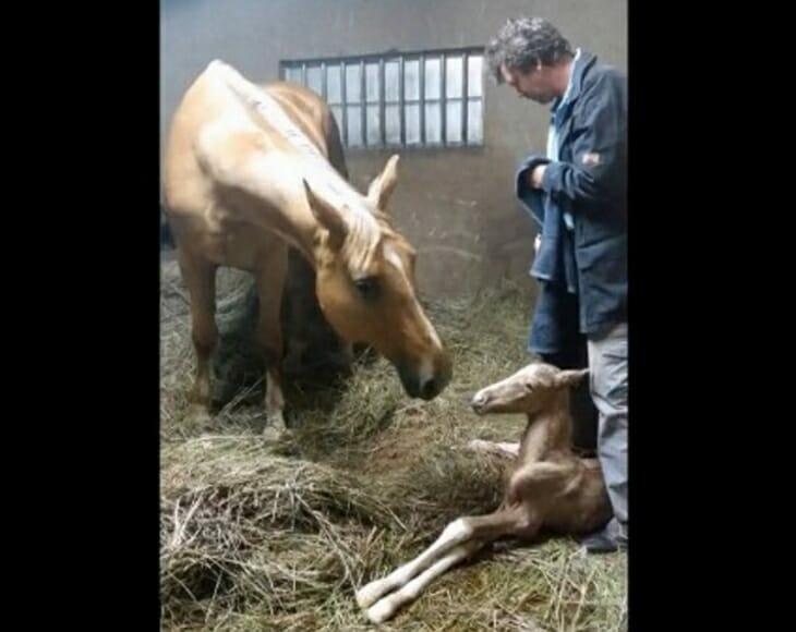 Владельцы лошади беспокоятся о звуке, который она издаёт во время родов, а когда рождается жеребёнок, происходит настоящее чудо