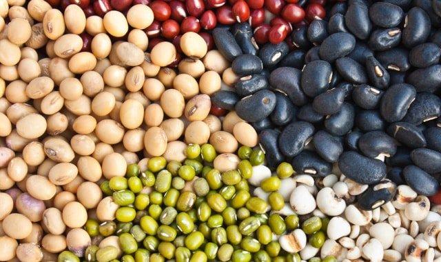 Фасоль – польза и вред, полезные свойства, калорийность и противопоказания