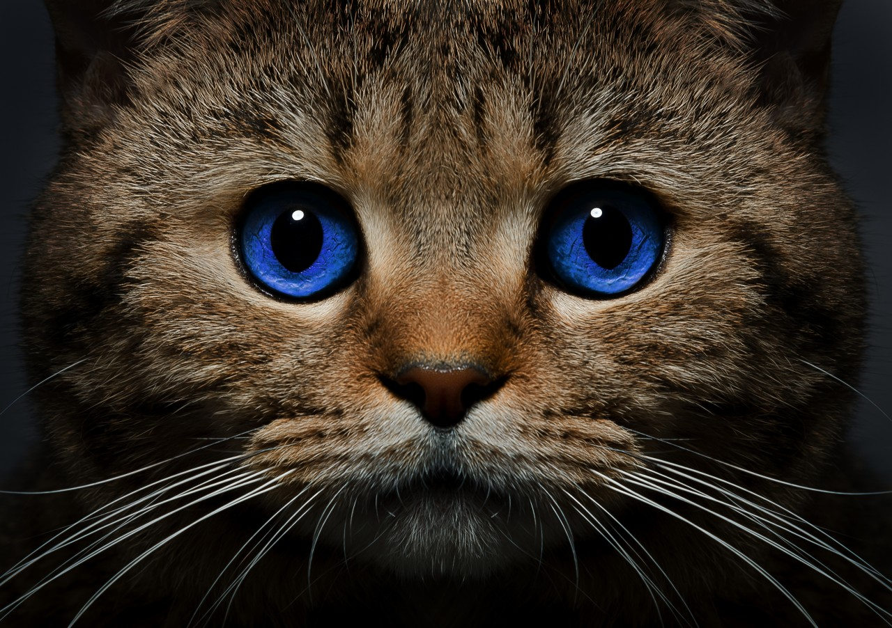 Поверья о котах и кошках