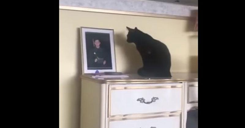 Черная кошка не перестает см…