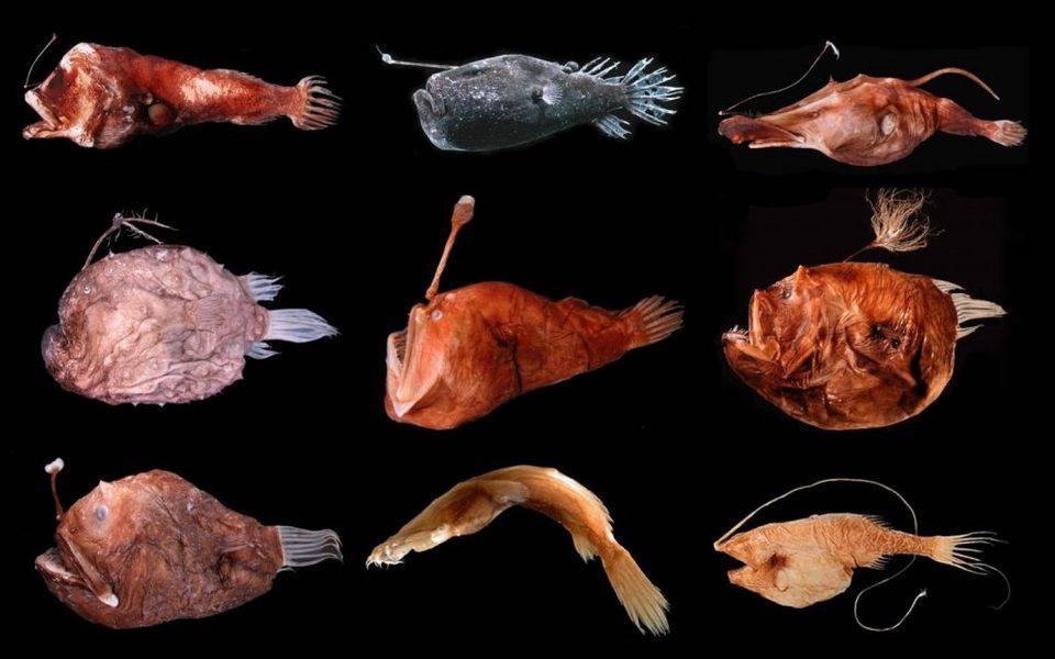 Сезон охоты на глубоководных…