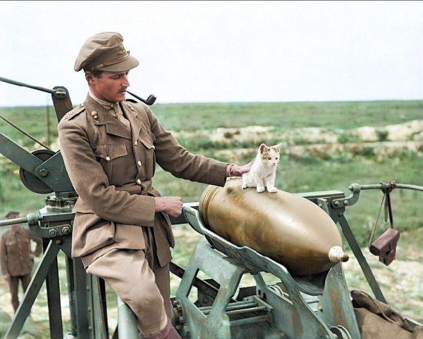 Перед котенком не устоит и солдат! Мужчина восстановил фото времен 1 мировой войны
