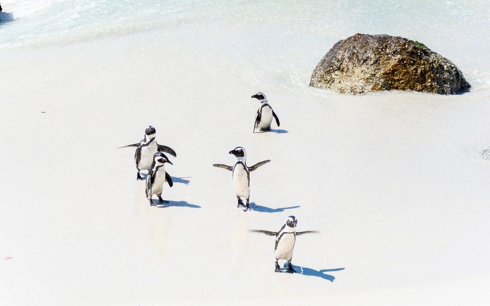 Где можно полюбоваться белыми медведями и пингвинами