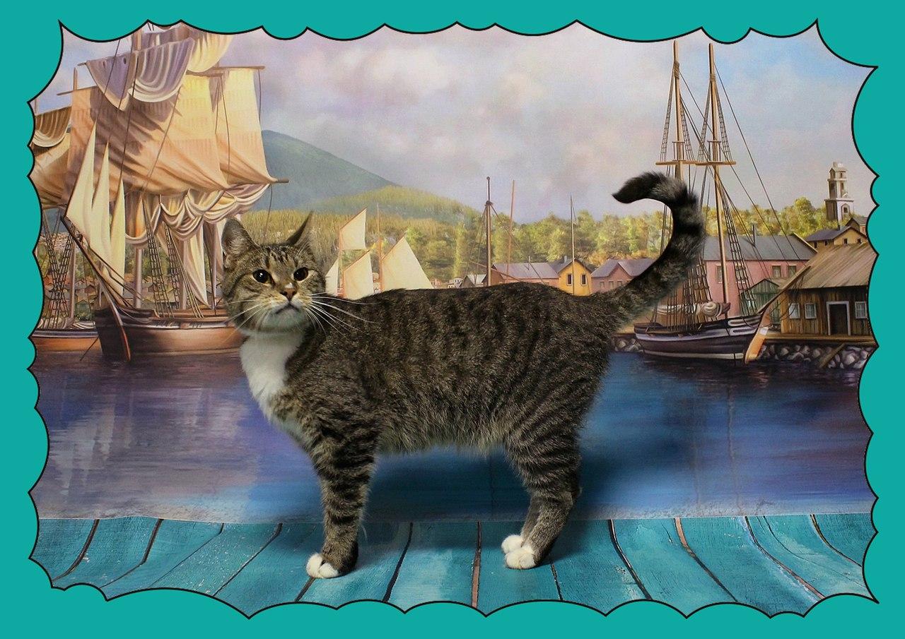"""Санкт-Петербург! Приглашаем на выставку-пристройство котов и кошек «Все оттенки кошачьего: """"Коты-мореходы:6"""""""