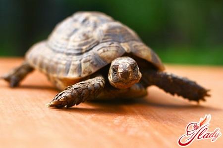 Уход за черепахами — ликбез для начинающих
