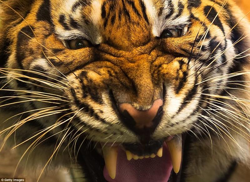 Фотографы подошли к этим страшным хищникам так близко, как вы бы никогда не рискнули