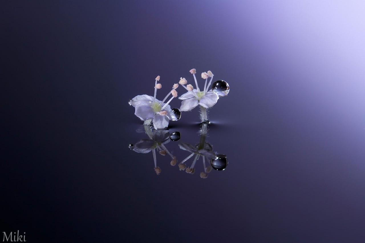 Фотография Crystal Tears автор Miki Asai на 500px
