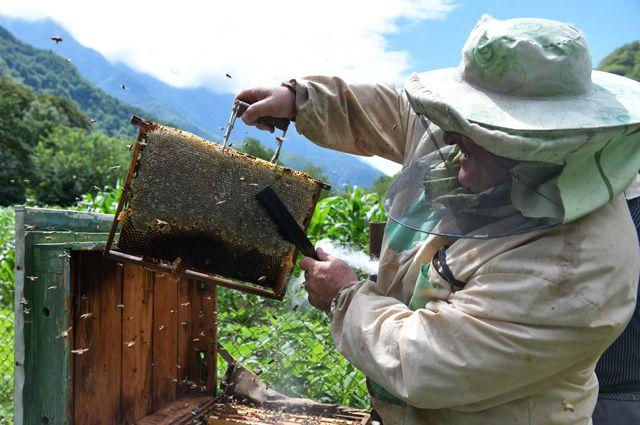 Чем злее пчёлы, тем больше мёда они производят.
