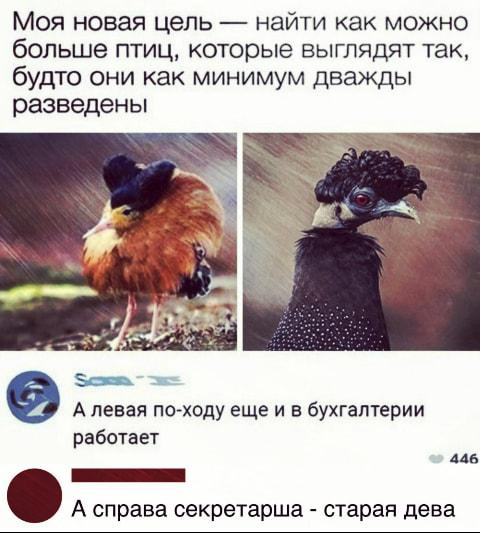 — Сколько раз говорить, что в русском языке нет слова «шо»!…