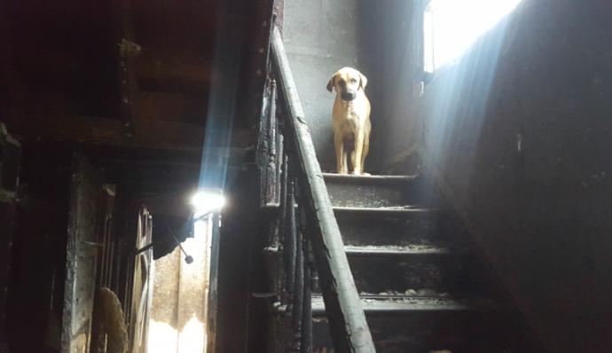 Бродячая собака по имени Мама долго не давалась в руки спасателям. Посмотрите, какую тайну скрывала от людей эта бедняжка