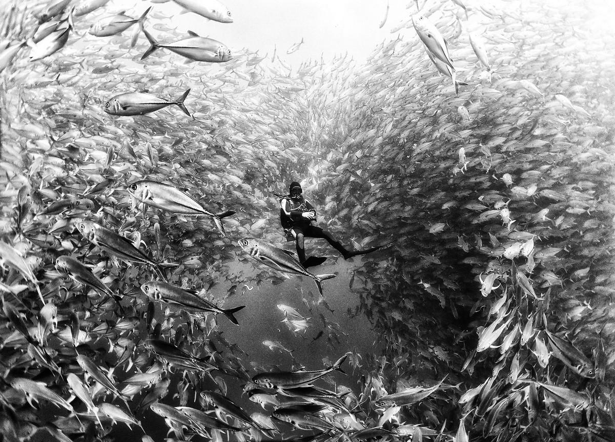 «Подводное царство»: духозахватые фотографии жизни под водой