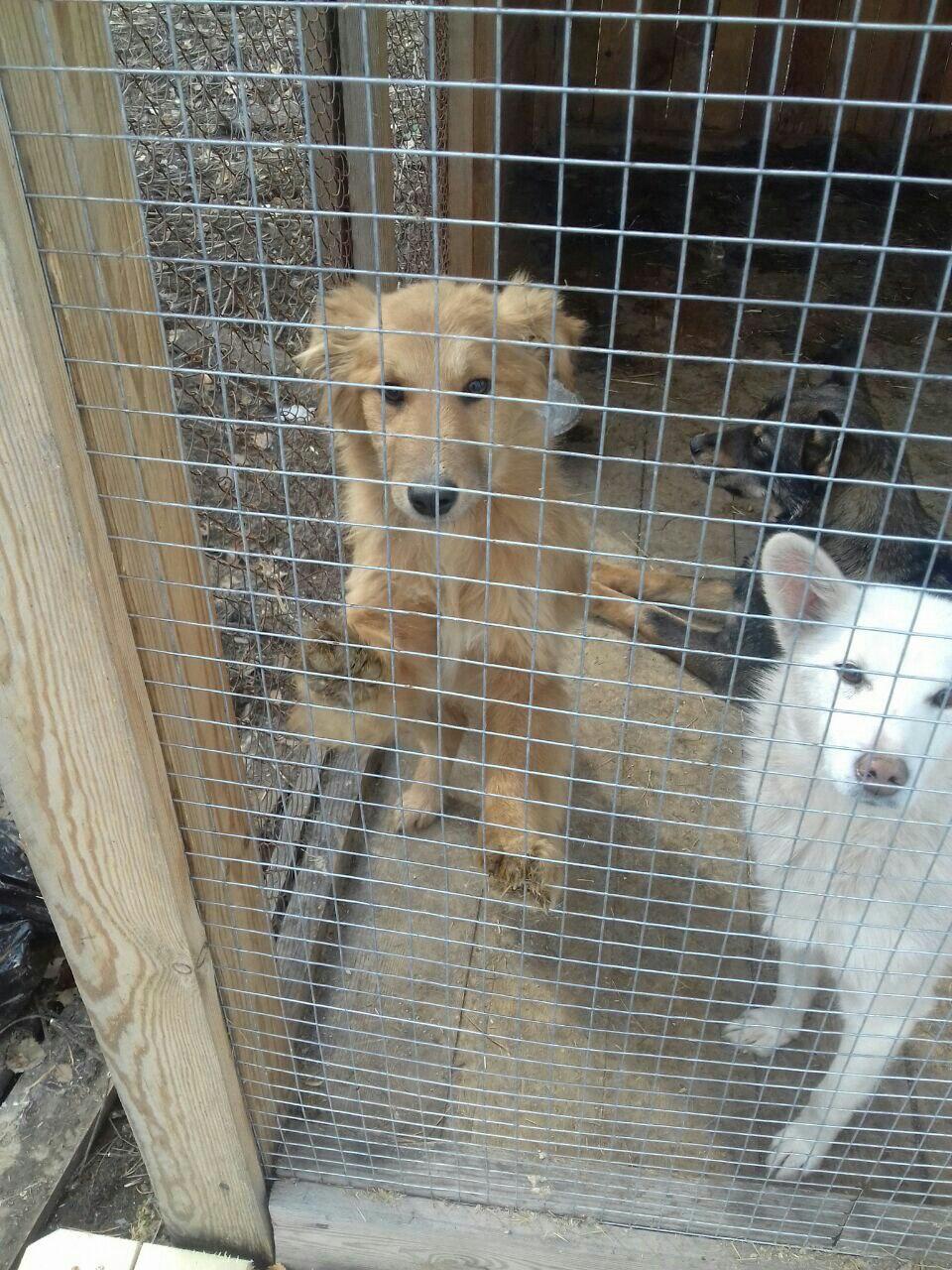 Под отлов в Сысертском районе попали ласковые домашние собаки. Помогите им, в начале следующей неделе их усыпят!!!