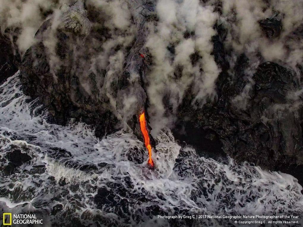 33 fotos, que a revista National Geographic chamou as melhores fotos de vida selvagem de 2017