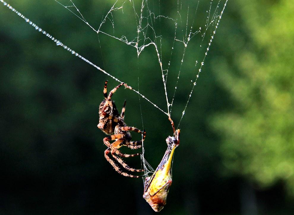 ловим пауком