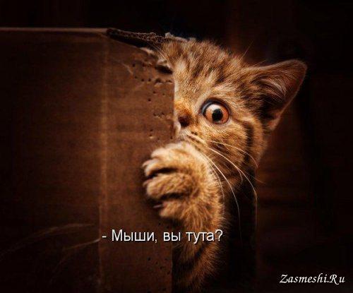 История пугливого кота