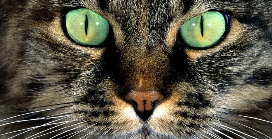 О кошачьих усах...
