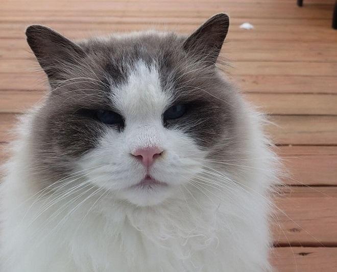 Красавец-кот остался на улице, когда хозяева переехали. Там он заболел, страдая от холода