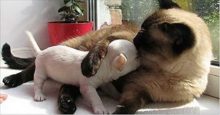 """""""Ой, ну и собаку купили. Иди сюда, горемыка, пожалею!"""" Замечательная подборка животных — друзей!"""