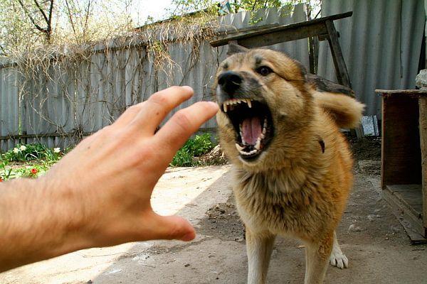 Что делать если напала собака