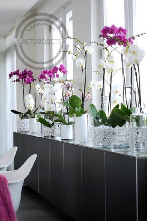 Семь советов по уходу за орхидеями для новичка.
