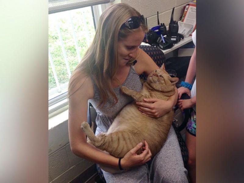 В США страдающий ожирением 15-килограммовый кот нашел новую семью, где его посадят на диету