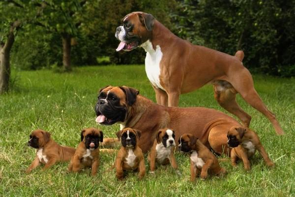 Собаки, которые гордятся своим чудесным потомством собаки, фотографии, щенки