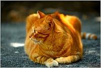 Кошки и Котята 73