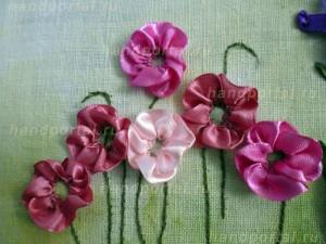 разные цветы ветренницы