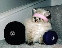 Кошки и Котята 20