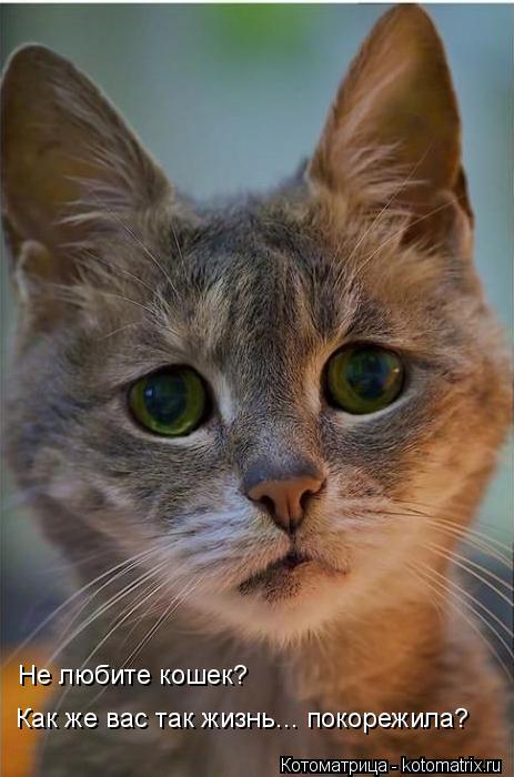 Котоматрица: Не любите кошек? Как же вас так жизнь... покорежила?