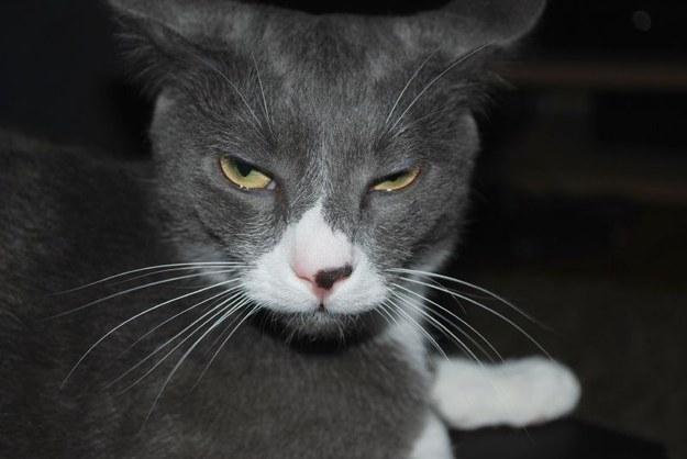 15 реакций котов на повседневные ситауции кот, реакция, юмор